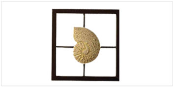 Decor - Wall Accessories - Frames - Snail Frame | Looking Good Furniture